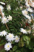 Mi amor con las flores